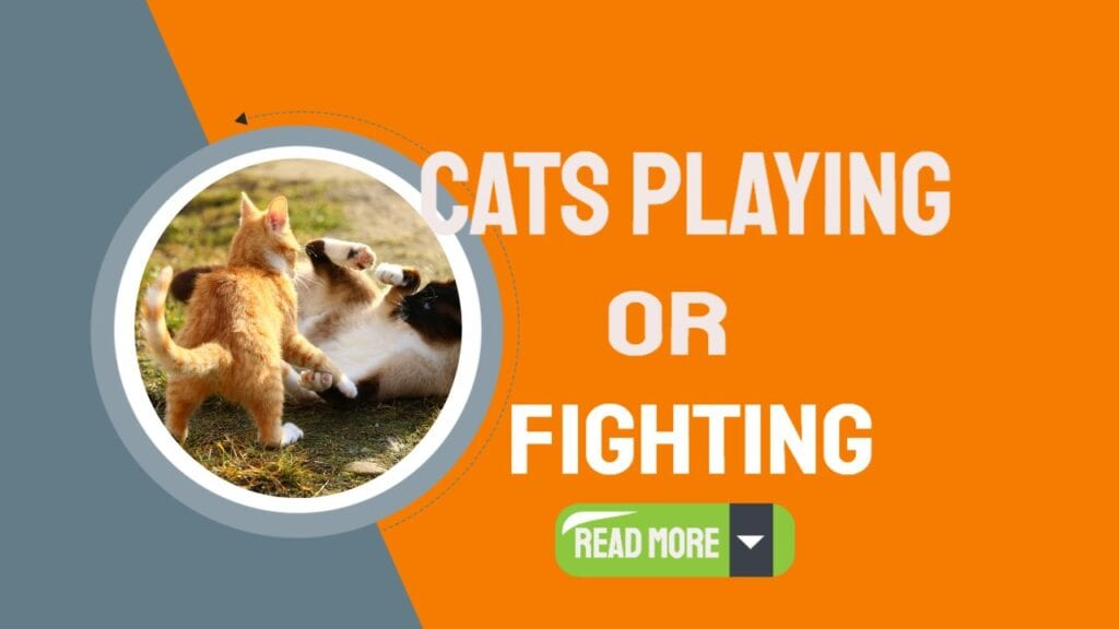 cats playing or fighting