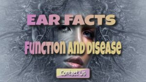 ear facts